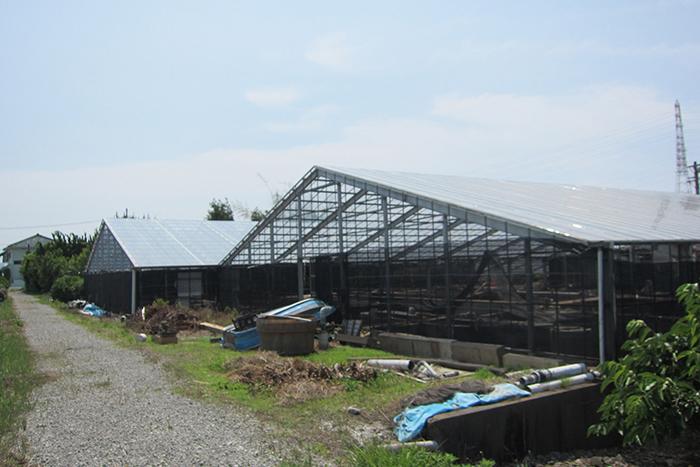 ベトナムの養殖所
